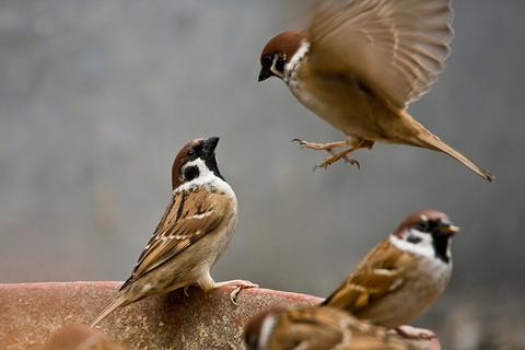 Kể về một loài chim