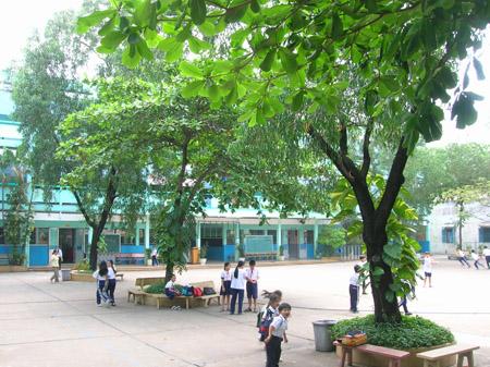 cây bàng sân trường - Tả về loại cây mà em thích