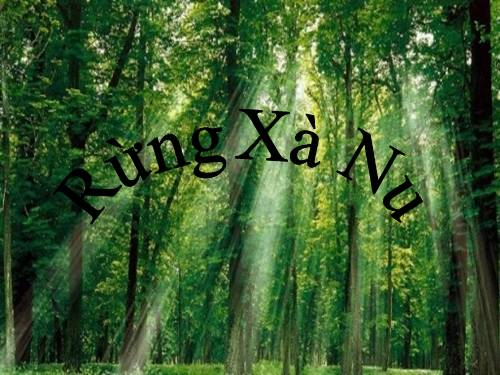 """Phân tích hình tượng cây xà nu trong truyện ngắn """"Rừng xà nu"""" của Nguyễn Trung Thành"""