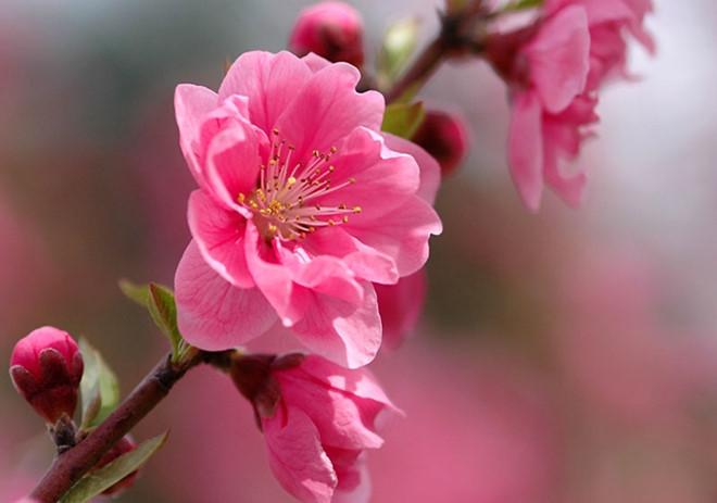 Phát biểu cảm nghĩ về mùa xuân của em