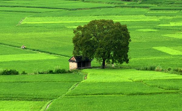 Tả cảnh buổi sáng trên cánh đồng