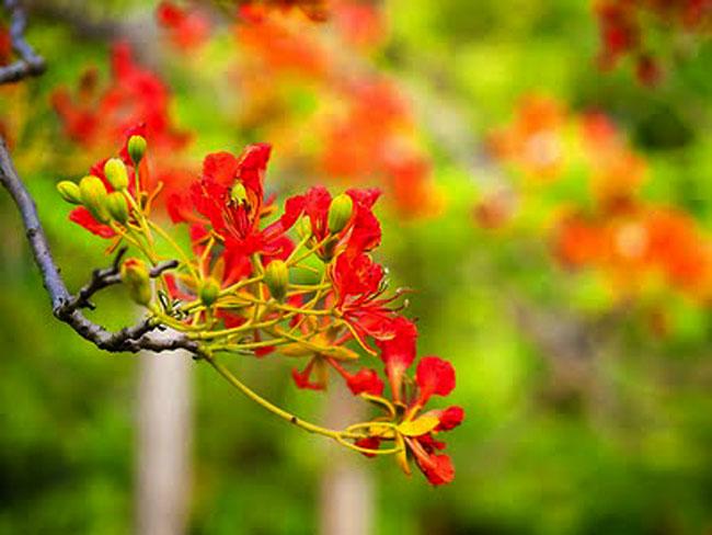 Hãy viết một bài văn biểu cảm của em về một loài cây nào đó mà em yêu thích