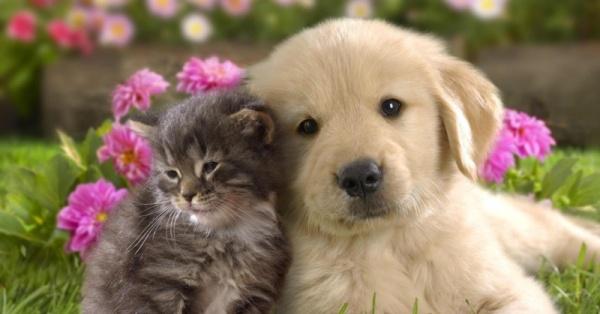 Thuyết minh về một loại vật nuôi – Bài tập làm văn số 1 lớp 9
