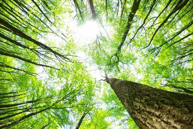 Em hãy chứng minh rằng bảo vệ rừng là bảo vệ cuộc sống của chúng ta