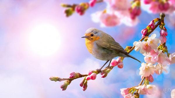 Phân tích bài thơ Mùa xuân nho nhỏ của Thanh Hải – Bài tập làm văn số 7 lớp 9