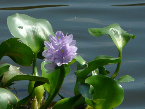 Phân tích bài thơ Mùa Xuân Nho Nhỏ của nhà thơ Thanh Hải