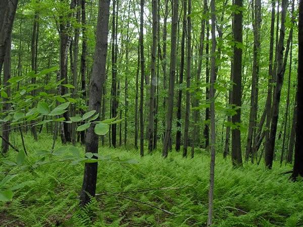 phan tich hinh tuong rung xa nu - Phân tích hình tượng rừng Xà Nu trong tác phẩm Rừng Xà Nu của nhà văn Nguyễn Trung Thành