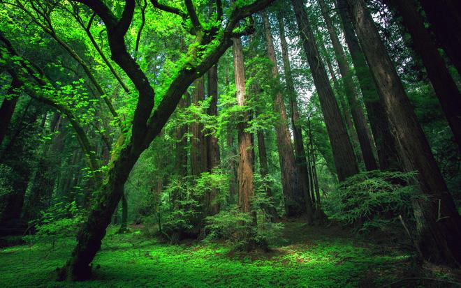 Thuyết minh về vai trò của cây cối trong việc bảo vệ môi trường