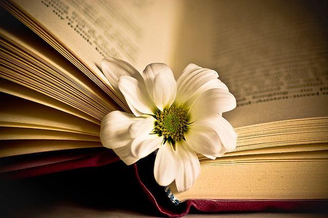 Văn học và tình thương – Bài tập làm văn số 7 lớp 8