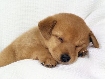 ta con cho lop 4 van mau ta con cho hay nhat - Tả con chó lớp 4 - văn mẫu tả con chó hay nhất