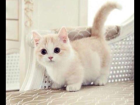 ta con meo lop 4 van mau hay ta con meo - Tả con mèo lớp 4 - văn mẫu hay tả con mèo